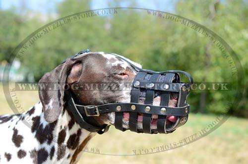 Leather Dog Muzzle