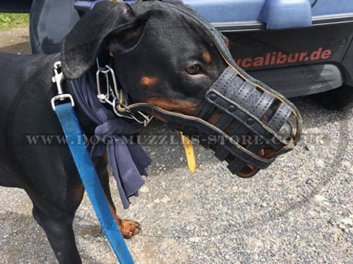 Leather Padded Dog Muzzle for Doberman