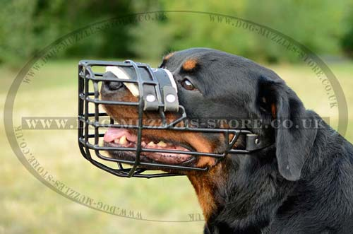 rubber coated wire dog muzzle