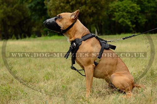 Dog Muzzles Reviews At Dog Forums The Best Dog Muzzles