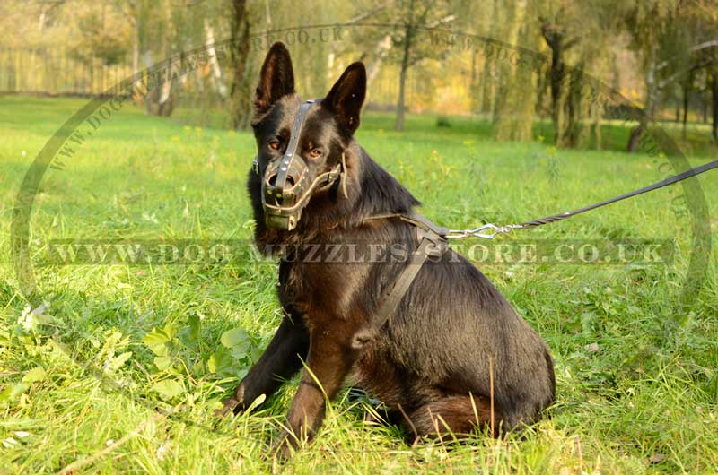 Reliable Leather Muzzle For German Shepherd