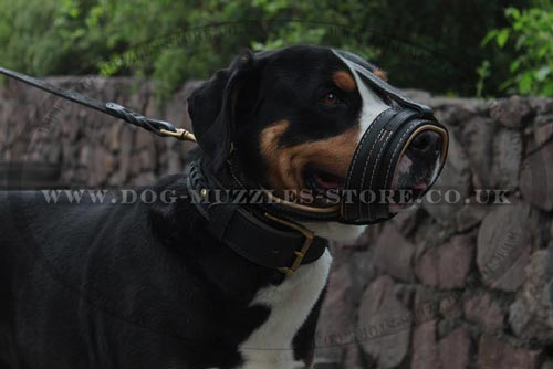 Swiss Mountain Dog Muzzle Loop