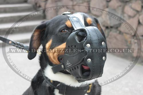 Swiss Mountain Dog Muzzle of Natural Leather