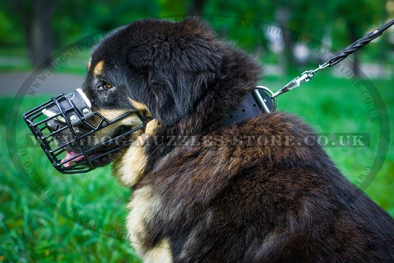 Tibetian Mastiff Wire Basket Muzzle