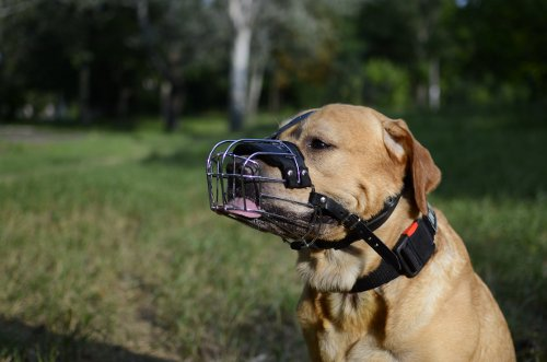 Wire Basket Dog Muzzle Types
