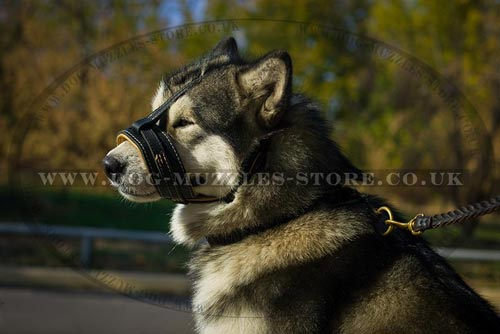 Padded Dog Muzzle for Stop Barking on Malamute
