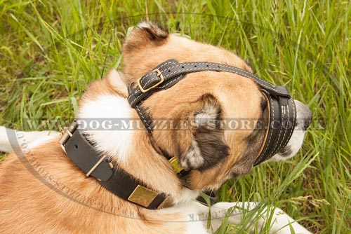 Anti Bark Dog Muzzle Loop for Central Asian Shepherd Dog Breed
