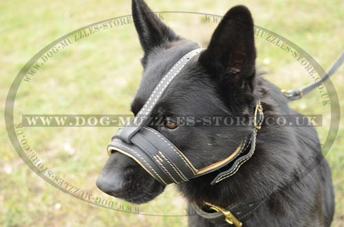 German Shephard muzzle