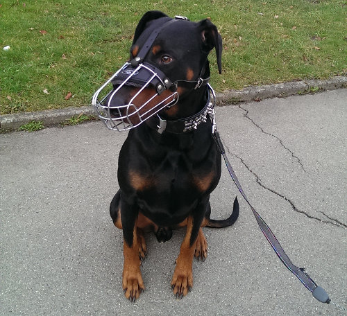 Buy Muzzles for Dogs UK