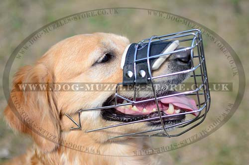 wire dog muzzle that allows drinking