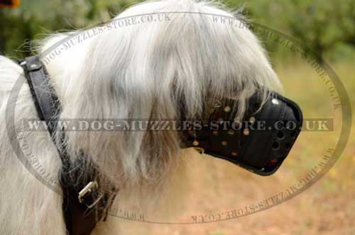 Basket Dog Muzzle for Large Breeds