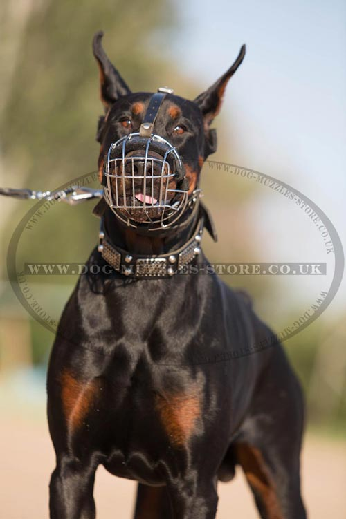Wire Muzzles for Dogs