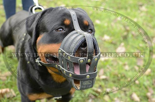 Padded Dog Muzzle for Rottweiler