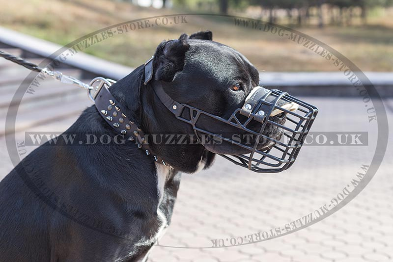 Reliable Wire Basket Muzzle For Cane Corso