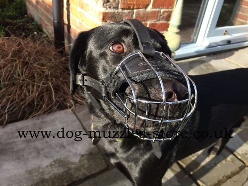Ventilated Wire Dog Muzzle Basket