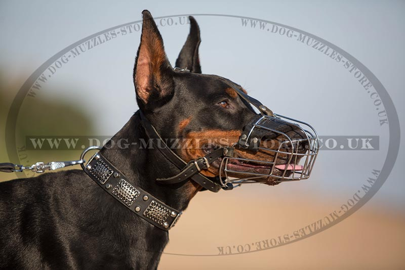 The Best Doberman Basket Muzzle