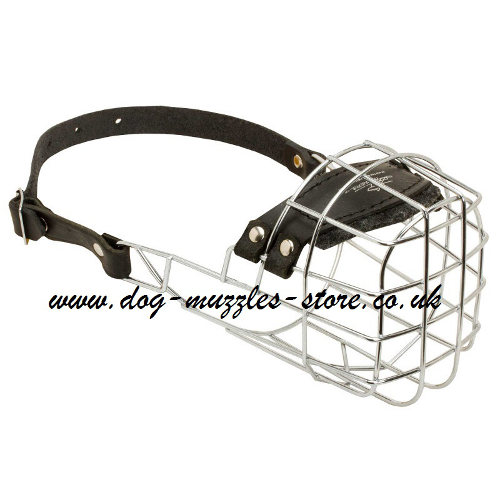 Best Dog Muzzles UK