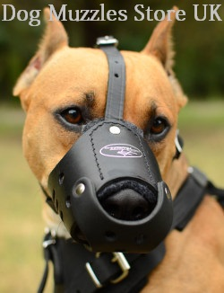 dog muzzle for dog safety and comfort
