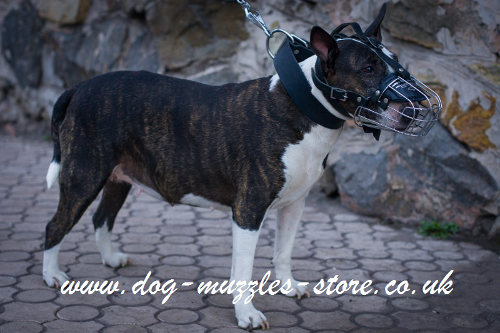 Best Muzzle for English Bull Terrier UK