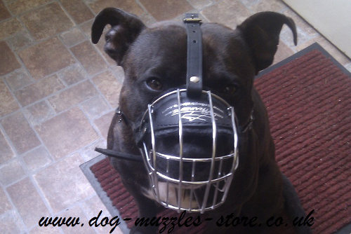 Staffie Muzzles UK