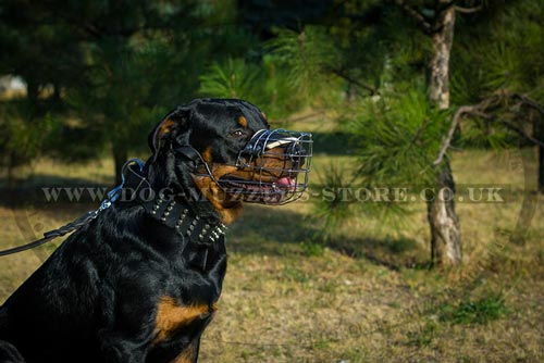 The best dog muzzle for Rottweiler