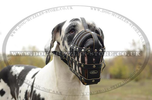 Strong Leather Dog Muzzle for Great Dane