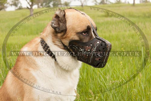 Big Dog Muzzle for Central Asian Shepherd