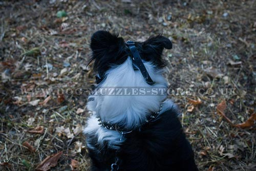 Collie Muzzle Basket for Dogs