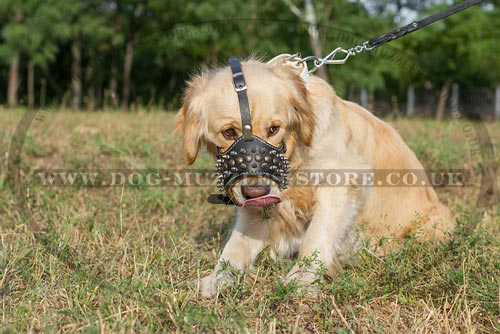 Buy Golden Retriever Muzzle for Dogs