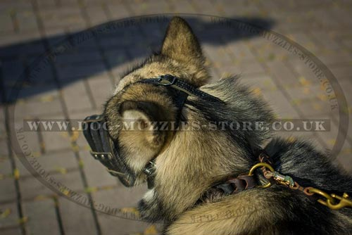 Soft Dog Muzzle for Alaskan Malamute
