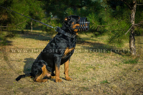 Rottweiler Muzzle UK for Sale Online