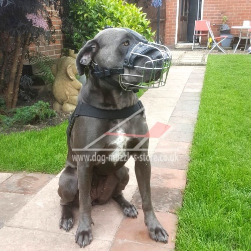Dog wire basket muzzle