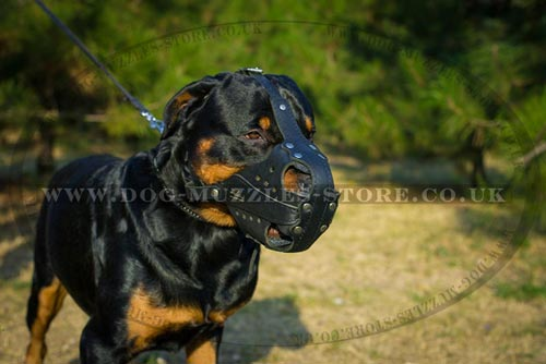 K9 Dog Muzzles UK Rottweiler Size