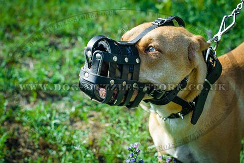 Leather Dog Muzzle for Pit Bull Terrier