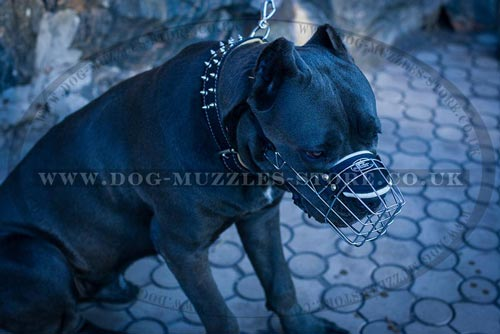Large dog muzzle for Cane Corso
