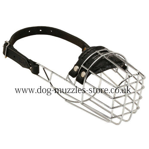 Dachshund Muzzle UK