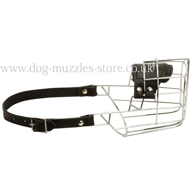 Dog Muzzle Pet Store Rich Ond
