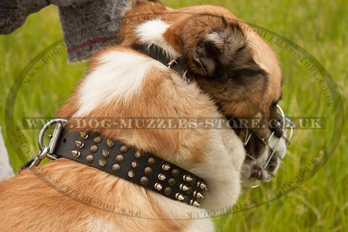 Central Asian Shepherd Dog Muzzle