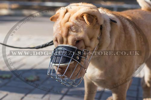 basket dog muzzles for sale