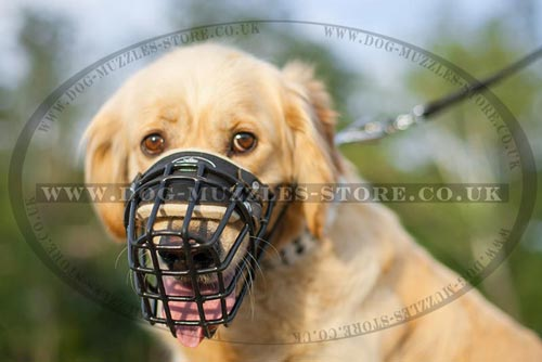 Soft Padded Dog Muzzle for Golden Retriever