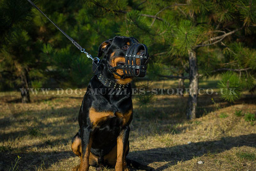 Basket Dog Muzzle for Rottweiler for Sale UK
