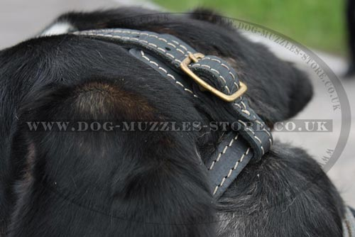 Soft Dog Muzzle Loop