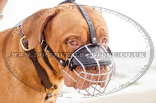 Dog muzzle for Dogue De Bordeaux UK