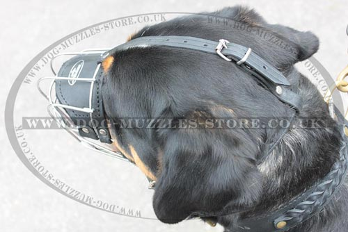 Sennenhund Muzzle for Dogs