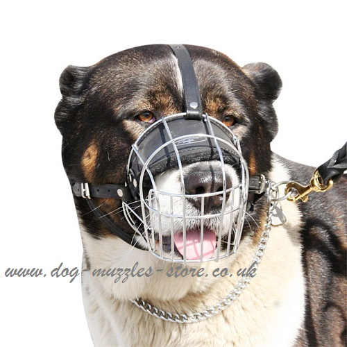 Buy Caucasian Shepherd Dogs Muzzles