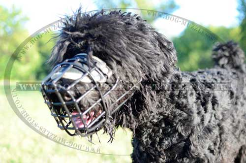 Black Russian Terrier dog muzzle