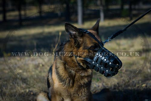 German Shepherd Muzzle Size