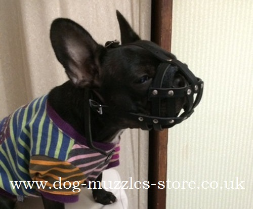 Leather Dog Muzzle for French Bulldog