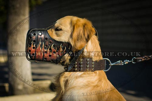 Golden Retriever Muzzle for  Intensive Dog Training
