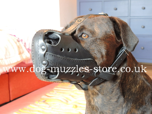 New attack dog muzzle